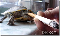 turtle1_682_461239a