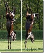 001_horse