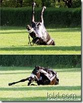 002_horse