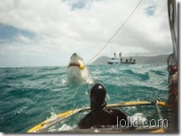 sharks_13