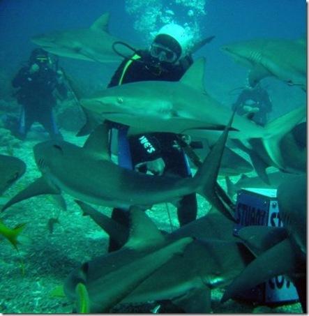 001_sharks