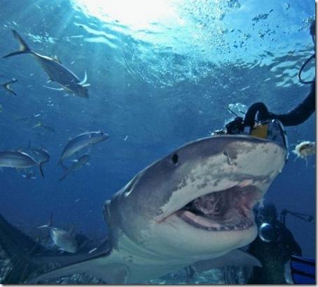 002_sharks