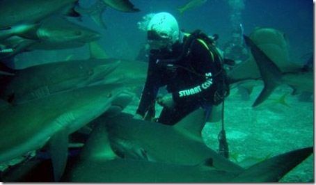 003_sharks