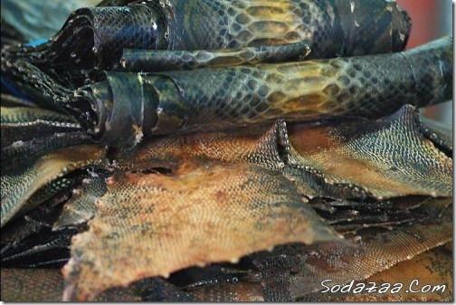 snake_10